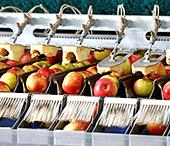 Maszyny do przetwórstwa rolno-spożywczego