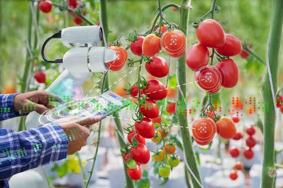 Innowacje w rolnictwie – poznaj technologie przyszłości