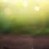 30 tysięcy drzew na 30 lat działalności. EFL posadzi las na Warmii