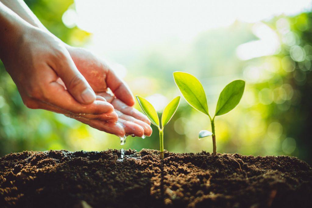 Posadzimy 30 tys. drzew na 30-lecie EFL. Dlaczego warto? [30 ZALET]